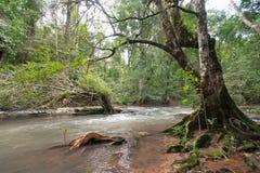 狂放的河在有绿色树的热带雨林里 免版税库存照片