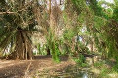 狂放的沼泽地风景 库存图片