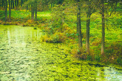 狂放的沼泽沼泽 免版税库存照片