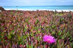 狂放的海岸在新西兰 图库摄影