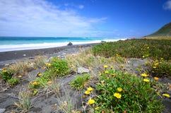 狂放的海岸在新西兰 免版税库存照片