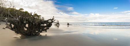 狂放的海滩180度全景  免版税库存照片