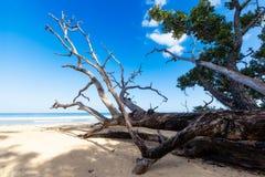 狂放的海滩巴拉望岛 免版税库存照片