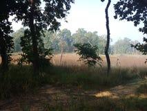 狂放的深深密林chitwan国家公园里面kumal tal 库存图片