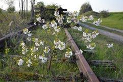 狂放的灌木在沿铁轨的一个铁路线中间增长并且茂盛 线,然而,被关闭和 免版税库存图片