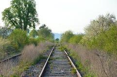 狂放的灌木在沿铁轨的一个铁路线中间增长并且茂盛 线,然而,被关闭和 库存照片