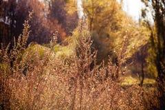 狂放的灌木 库存图片
