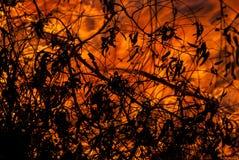 狂放的火和叶子 免版税库存照片