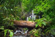 狂放的热带森林。 绿色叶子和瀑布 免版税库存照片