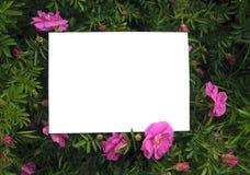 狂放的玫瑰或花 免版税库存照片