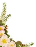 狂放的玫瑰色花壁角安排 免版税库存照片