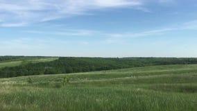 狂放的绿色领域自然天空蔚蓝风景 自然俄罗斯风景绿草小山小生活方式森林概念 股票录像
