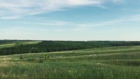 狂放的绿色领域自然天空蔚蓝风景 自然俄罗斯风景绿草小山生活方式小森林概念 股票视频