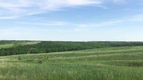 狂放的绿色领域自然天空蔚蓝风景 自然俄罗斯风景绿草生活方式小山小森林概念 股票录像