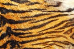 狂放的老虎皮革纹理  免版税库存照片