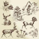 狂放的自然、森林和山 免版税库存照片