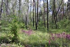 狂放的自然在夏天 森林 免版税库存图片