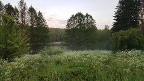 狂放的自然在晚上 免版税库存照片