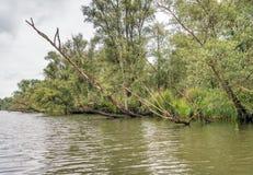 狂放的自然在荷兰国家公园 库存照片