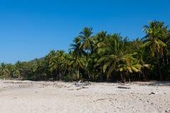 狂放的自然海滩哥斯达黎加,圣诞老人特里萨 库存照片