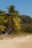 狂放的自然海滩哥斯达黎加,圣诞老人特里萨 免版税库存图片