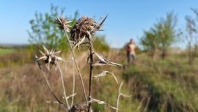狂放的自然背景的干燥植物与一个人的 库存图片