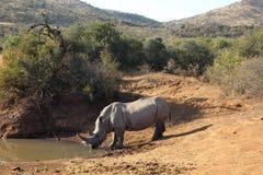 狂放的自然,南非共和国 库存照片