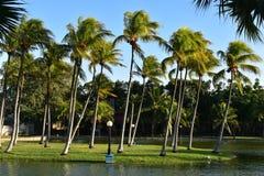 狂放的自然,棕榈树在巴拉德罗角,古巴 免版税库存图片