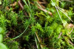 狂放的草坪在森林,杂草区域里 草皮纹理背景 免版税库存图片