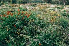 狂放的草本和花在领域与绿色和草 库存图片