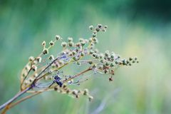 狂放的草甸开花风景美好的bokeh 软性的抽象植物弄脏了背景,选择聚焦摄影 库存图片