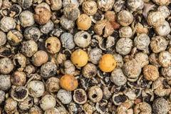 狂放的莓果和种子背景 免版税库存照片