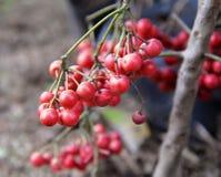 狂放的莓果 免版税图库摄影