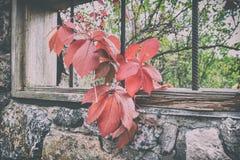 狂放的葡萄分支在石花岗岩墙壁背景的  库存图片