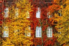 狂放的葡萄红色秋天,对房子墙壁 库存图片