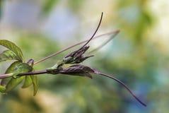 年轻狂放的葡萄,沐浴在春天su的光芒 免版税库存图片