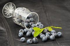 狂放的蓝莓从在黑皮革的小葡萄酒杯驱散了 免版税库存照片