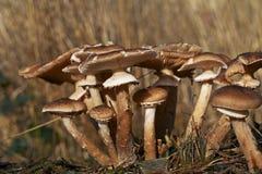狂放的蘑菇在森林里在一晴朗的秋天天 免版税库存图片