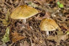 狂放的蘑菇在森林里 库存图片