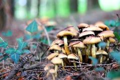 狂放的蘑菇 免版税库存照片