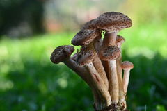 狂放的蘑菇本质上 图库摄影