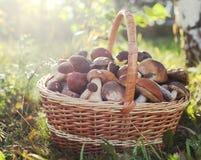 狂放的蘑菇的汇集在篮子的在地面上 免版税库存图片