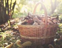 狂放的蘑菇篮子在秋天森林里 库存照片