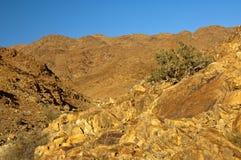 狂放的象沙漠的风景在理查德斯维德 免版税库存图片