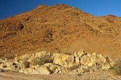 狂放的象沙漠的风景在理查德斯维德 库存图片