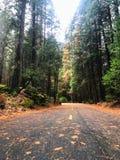 狂放的路和自然在优胜美地自然公园 库存图片