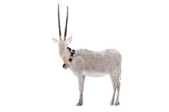 狂放的阿拉伯羚羊属leucoryx由美好的金子制成 免版税图库摄影