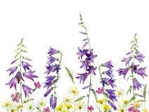 狂放的雏菊、康乃馨和响铃背景  库存例证