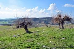 狂放的风景在塞浦路斯 免版税库存照片