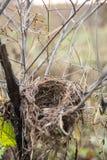 狂放的鸟巢在森林里 免版税库存图片